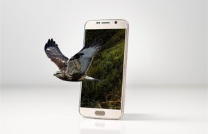 A bird is jumping out of the smartphone